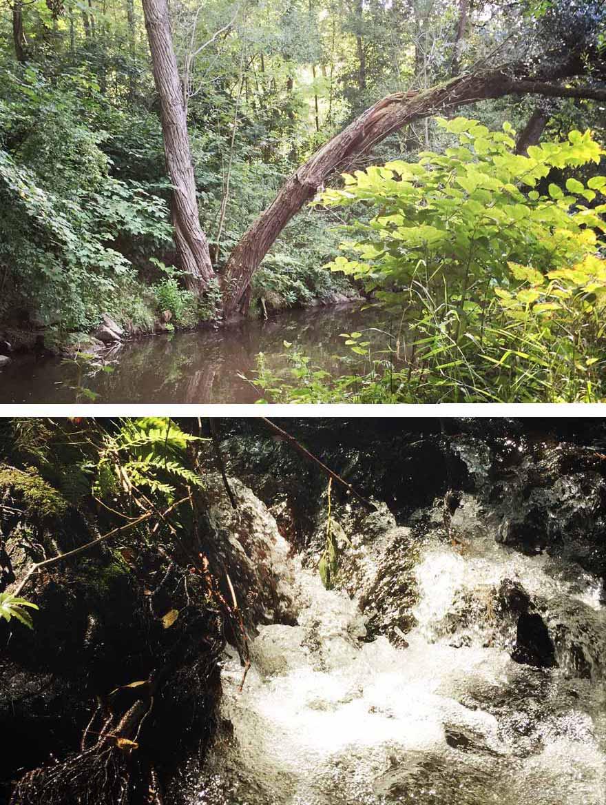die Natur an Mud, Billbach und Saubach